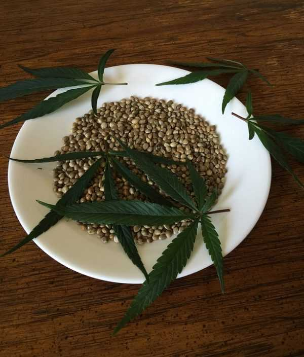 how to grow weed from seed