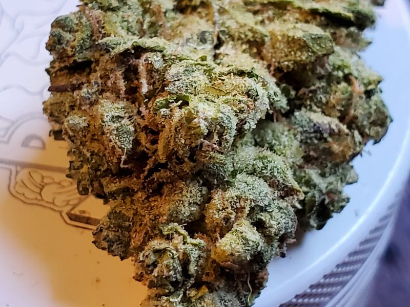 Fatso Strain Review, for the THC glutton!  From Purple Lotus